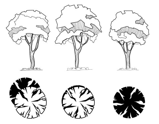 trees for a landscape design. different hand drawn trees isolated on white background, sketch, architectural drawing style trees set. top and front view. - architecture clipart stock illustrations