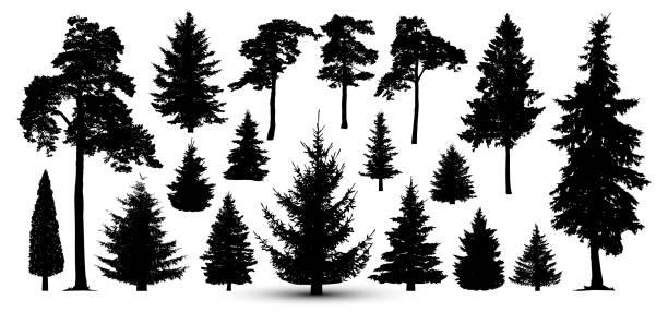 bildbanksillustrationer, clip art samt tecknat material och ikoner med träd skogen set, vektor. siluett av furu, gran - ädelgran