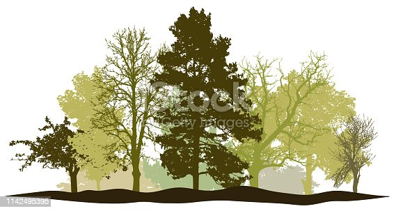 Trees forest springtime silhouette vector