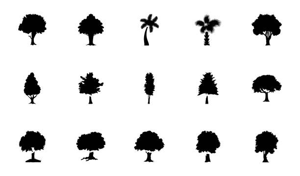Trees Glyph Vector Icons Pack These glyph vector icons represent trees. The pack has wide range of trees and greenery which are perfect to be used in related projects. cottonwood tree stock illustrations