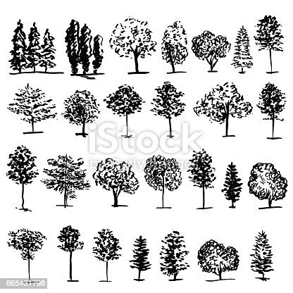 Trees Graphic Hand Drawn Vector Engraving Doodle Sketch