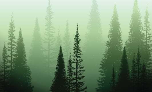 Trees In The Green Mist clipart