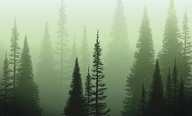 bildbanksillustrationer, clip art samt tecknat material och ikoner med trees in the green mist - forest