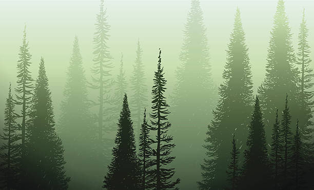 Trees In The Green Mist Vector illustration of a green forest eneloped in a green fog pine tree stock illustrations