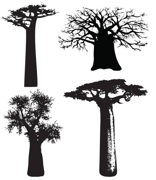 Trees of Africa vector art illustration