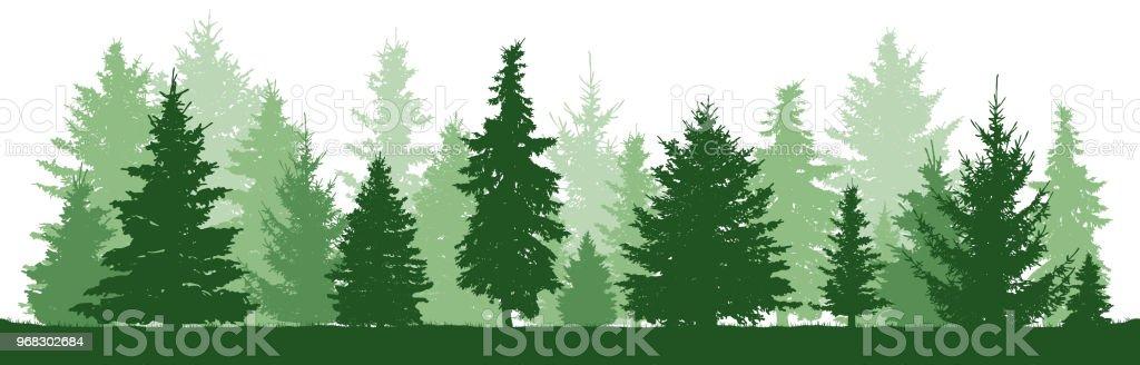 Ilustración de Árboles De Pino Abeto Abeto árbol De Navidad Bosque ...
