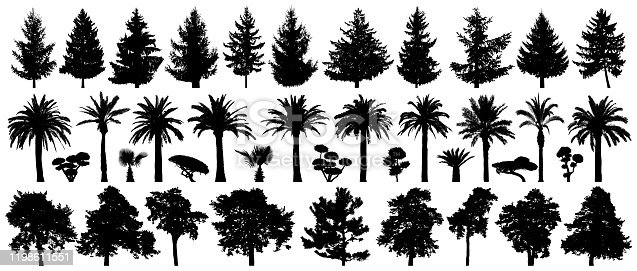 Trees set isolated. Forest background, nature, landscape. Pine, spruce, Christmas tree, palm tree, bushes. Silhouette vector illustration