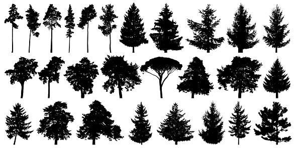 Trees set isolated on white background. Forest background, nature, landscape. Evergreen coniferous trees. Pine, spruce, Christmas tree. Silhouette vector illustration