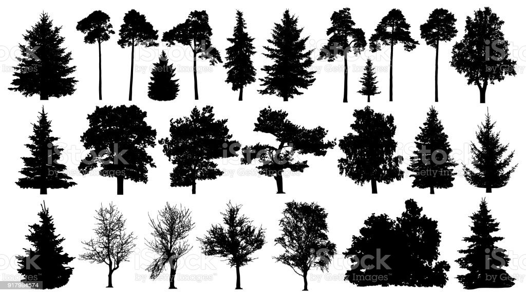 Trees set silhouette. Coniferous forest. Isolated tree on white background. vector art illustration