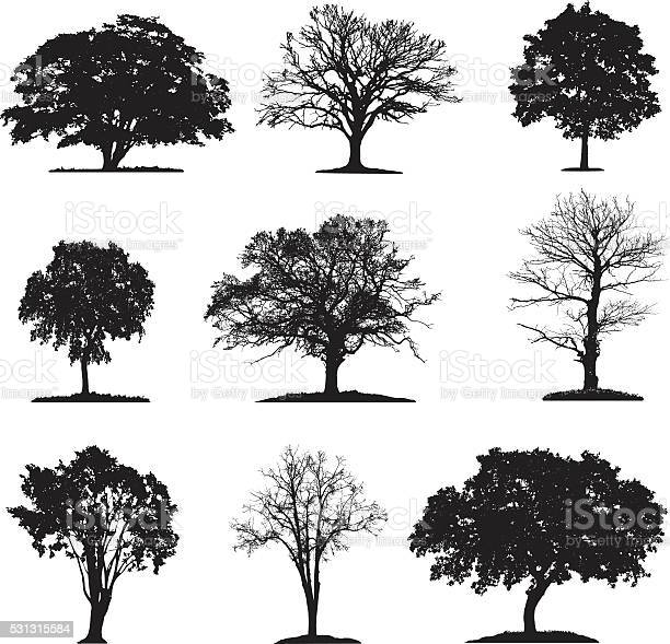 Trees silhouette collection vector id531315584?b=1&k=6&m=531315584&s=612x612&h=9ounmmbhzxprugxfcezz iweiq7zpmdegtgmt l2hey=