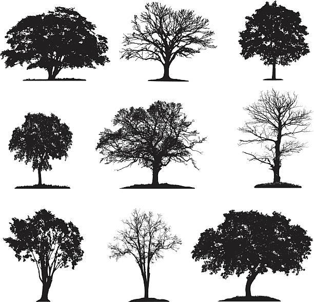 ilustraciones, imágenes clip art, dibujos animados e iconos de stock de colección de silueta de los árboles - árbol