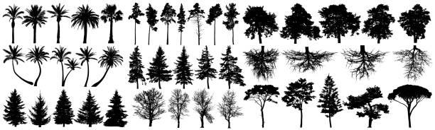 ilustraciones, imágenes clip art, dibujos animados e iconos de stock de conjunto de vectores de silueta de árboles. aislado sobre fondo blanco - árbol