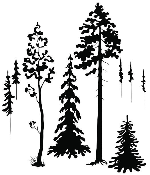 Trees silhouettes Coniferous trees silhouettes set. back lit stock illustrations