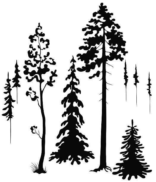 drzewa sylwetki - gałąź część rośliny stock illustrations