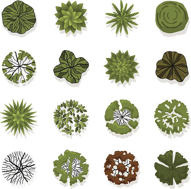 Trees top view for landscape vector illustration vector art illustration
