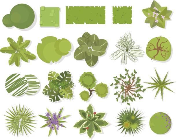 木平面図です。別の木々、植物ベクター建築もランドス ケープ デザイン。造園記号セットの分離ホワイト - 森林 俯瞰点のイラスト素材/クリップアート素材/マンガ素材/アイコン素材