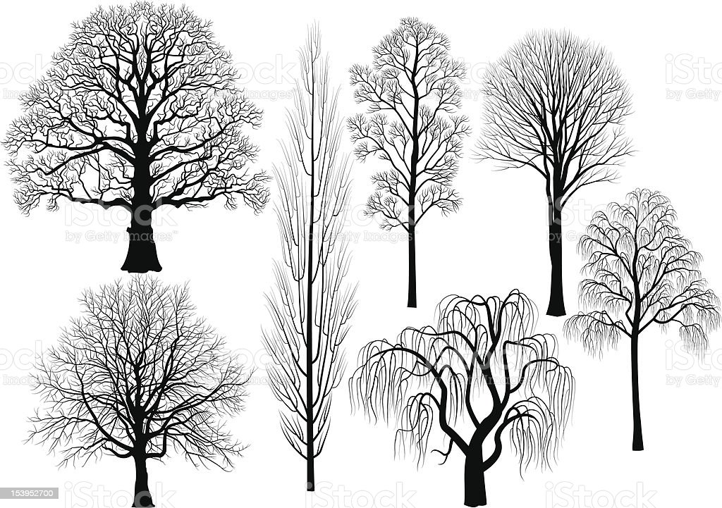 Arbres - Illustration vectorielle