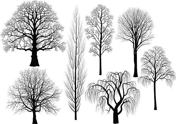 bäume - winterruhe stock-grafiken, -clipart, -cartoons und -symbole