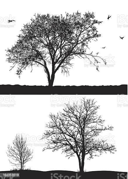 Trees vector id164313519?b=1&k=6&m=164313519&s=612x612&h=oycdgqo6y48xvzpir3wkvhopqbqop6eodt6v5hus vi=
