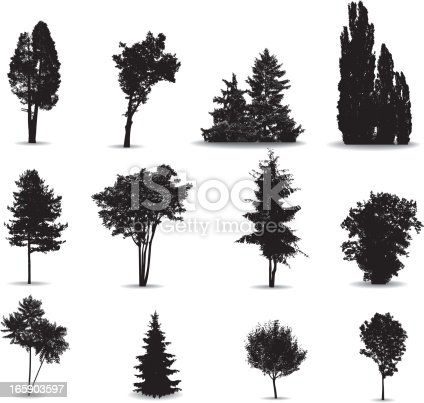 Arranged outlines of trees from the vicinity of