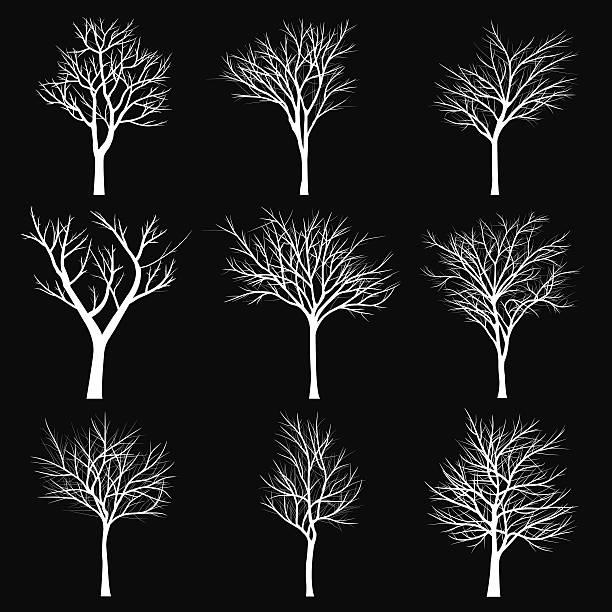 bäume mit dead branch - winterruhe stock-grafiken, -clipart, -cartoons und -symbole