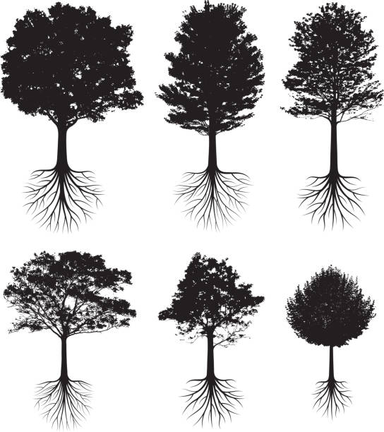 Trees with roots silhouettes black and white vector icon set Trees with roots silhouettes black and white set root hair stock illustrations