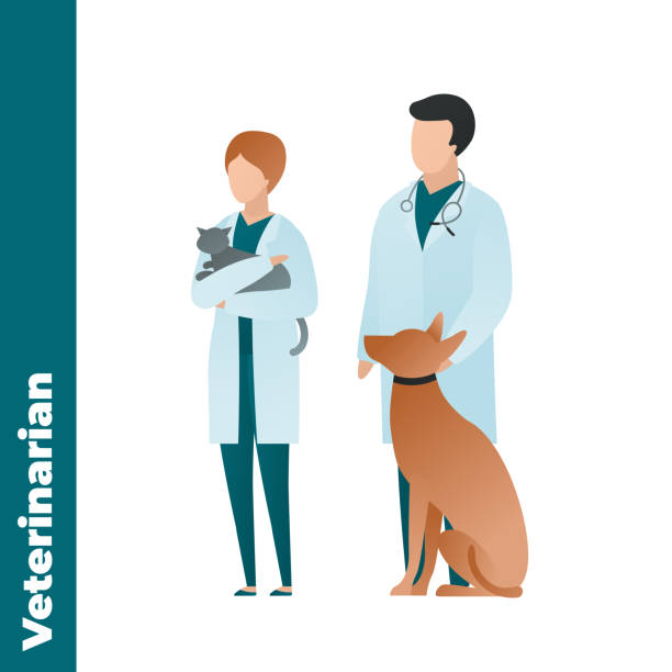 bildbanksillustrationer, clip art samt tecknat material och ikoner med trendig platt medicinsk karaktär vektor karikatyr illustration. uppsättning manliga och kvinnliga veterinär läkare team isolerade på vit bakgrund. coat uniform, stetoskop, sittande hund och katt. veterinärkliniken. - djursjukhus