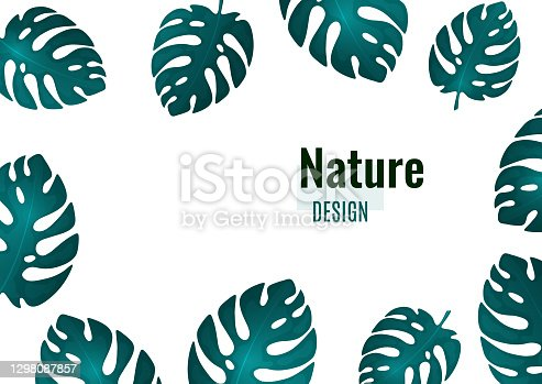 istock Trendy natural design of bright monstera leaves, place for text, white background. Botanical vector illustrations for advertising. 1298087857