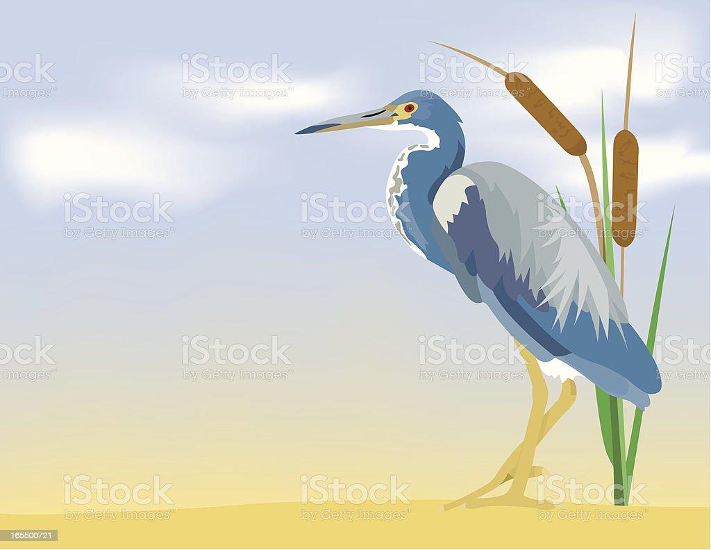 Tricolored Heron vector art illustration