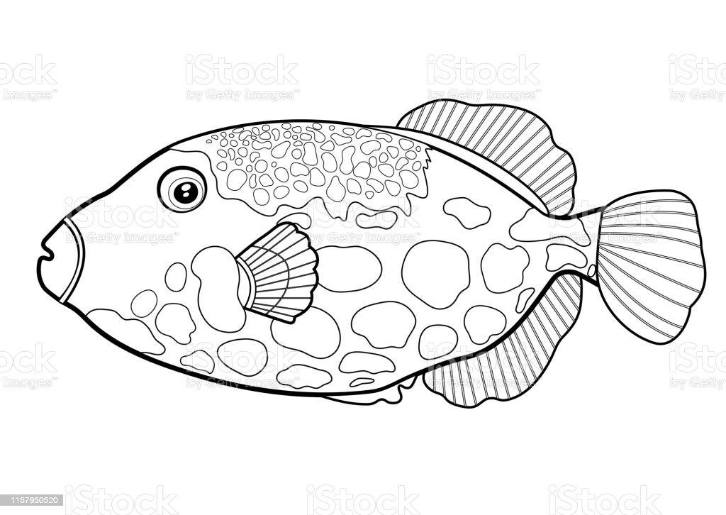 Triggerfish Balik Palyaco Cizgi Siluet Karikatur El Cizilmis Deniz