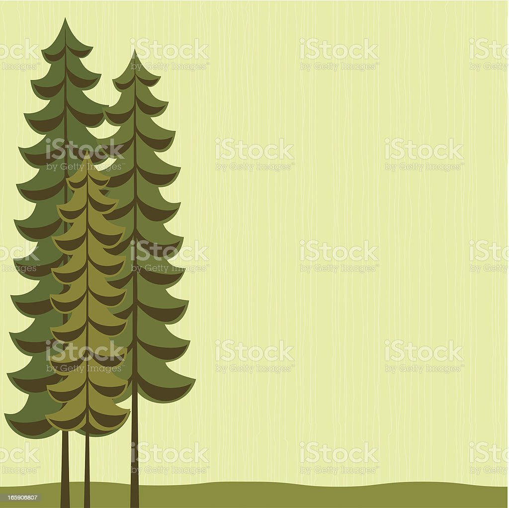 Trio of tall evergreen trees royalty-free stock vector art