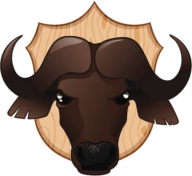 Trofe - Cape Buffalo Trofe - Head of a Cape Buffalo, grouped head individualy. stuffed stock illustrations