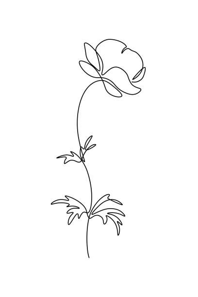 ilustrações, clipart, desenhos animados e ícones de flor de trollius - papoula planta