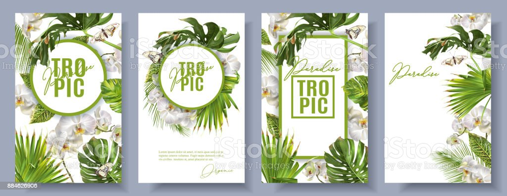 Tropic orchidee wit setvectorkunst illustratie