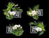 Vector botanical horizontal banners set with tropical leaves orchid flowers on black. Design for cosmetics, spa, health care products, travel company. Can be used as summer background
