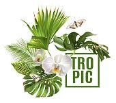 Tropic plants banner
