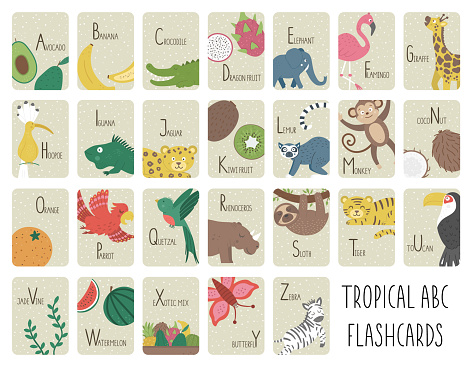 Tropical alphabet cards for children. Cute cartoon ABC set with exotic animals, birds, fruits, insects. Funny jungle flashcards for teaching reading or phonics for kids. English language letters pack