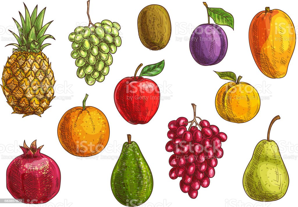 Tropical and exotic fruits isolated icons – Vektorgrafik