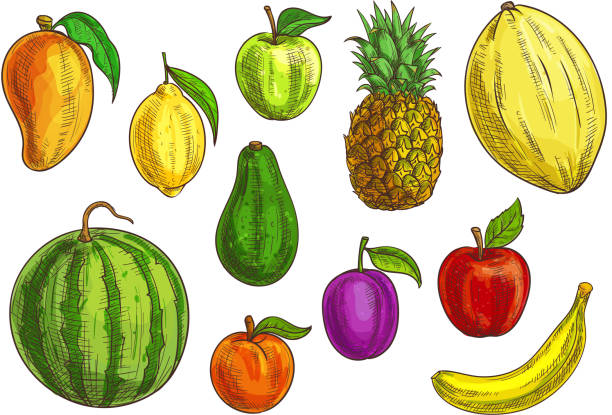 Tropical and exotic fruits set Hand drawn tropical and exotic fruits illustration. Isolated fruit elements. Vector sketches of banana, green and red apple, mango, watermelon, lemon, avocado, apricot, plum, pineapple and melon avocado silhouettes stock illustrations
