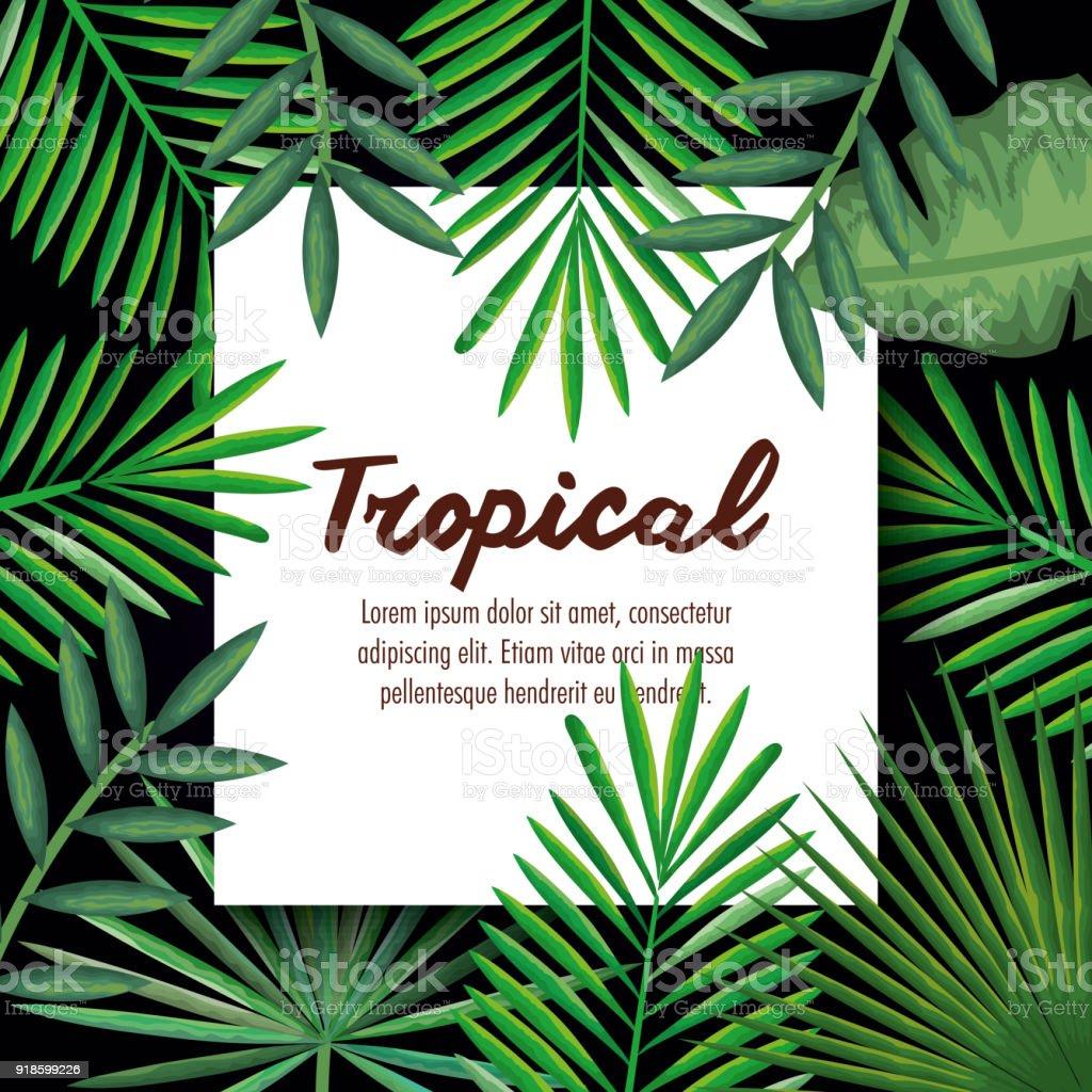 Tropische Und Exotische Palmen Blatter Stock Vektor Art Und Mehr