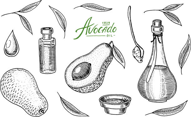ilustrações de stock, clip art, desenhos animados e ícones de tropical avocado. set of evergreen fruit plant. organic oil in the bottle. leaves and branches, leaf and half seeds. isolated vector hand drawn. vintage template for design. engraved monochrome sketch - abacate