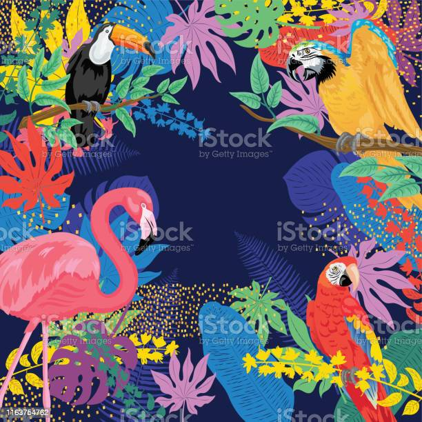 Tropical background with flamingos parrots and toucans vector id1163754762?b=1&k=6&m=1163754762&s=612x612&h=qpawngc6qcxhqdpoozr6gws3qz2uor6zufbmgovr4cm=