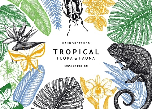 Tropical banner design.