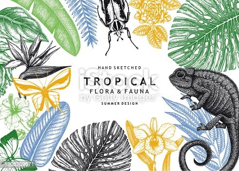 Vector frame with hand drawn tropical plants, exotic flowers, palm leaves, insects and chameleon. Vintage wildlife background. Summer template with tropical plants and animals.