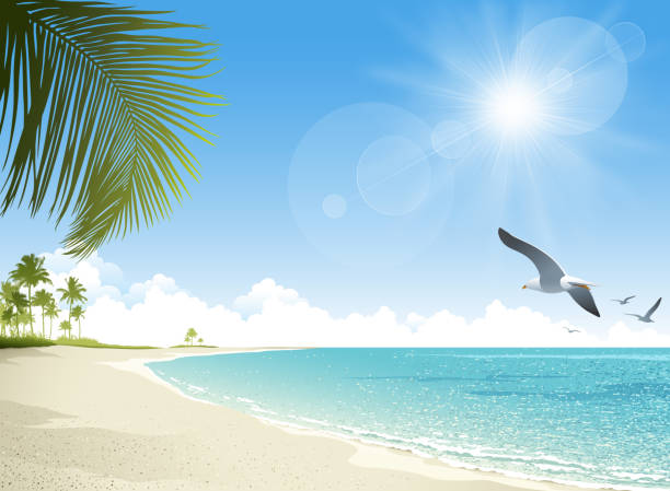 stockillustraties, clipart, cartoons en iconen met tropical beach background - zonnig