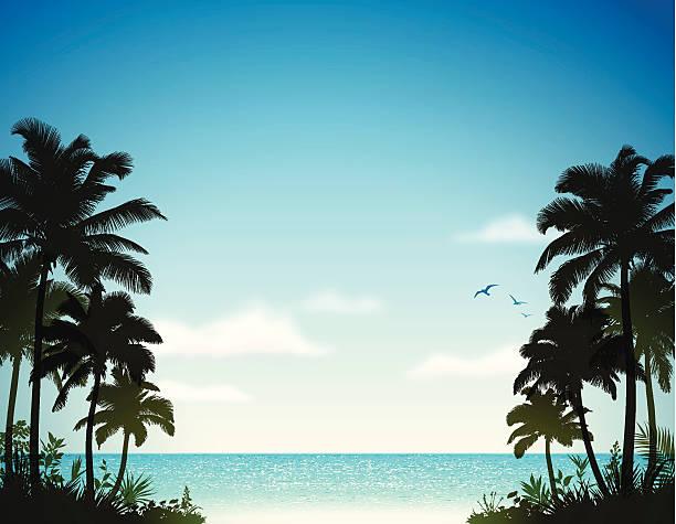 bildbanksillustrationer, clip art samt tecknat material och ikoner med tropical beach with palm trees - ö