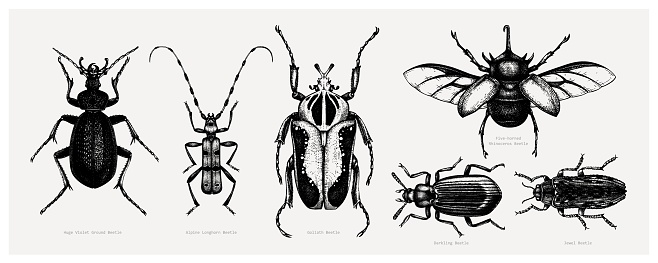 Tropical beetles collection