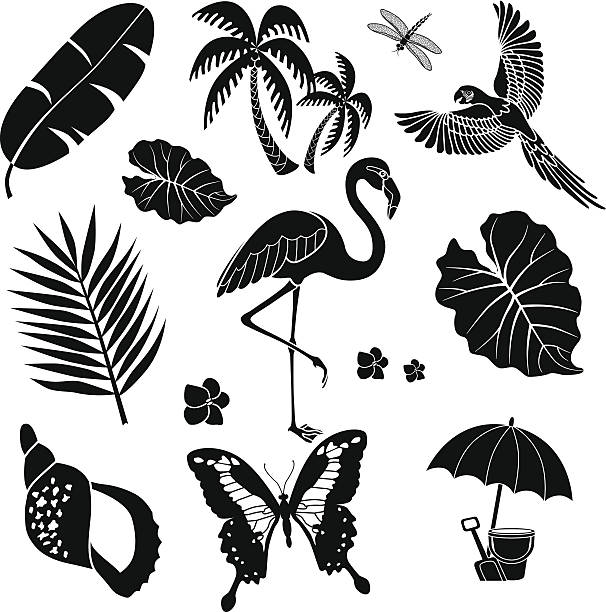 tropical birds plants and insects vector art illustration
