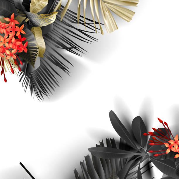 stockillustraties, clipart, cartoons en iconen met tropische zwarte en gouden bladeren op witte achtergrond - pauwenkers