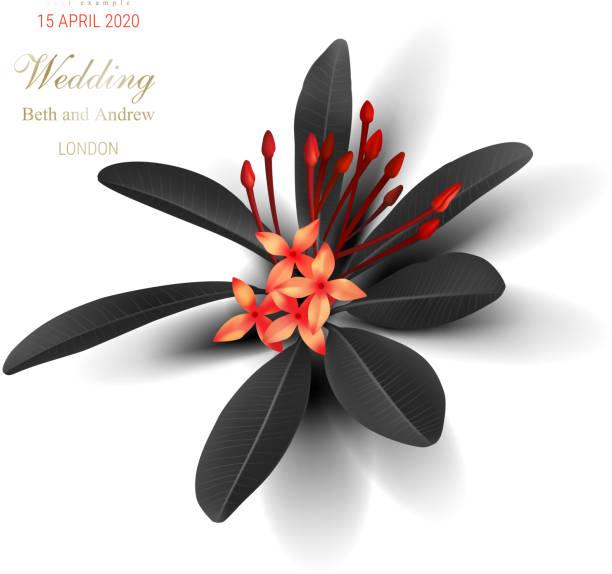 stockillustraties, clipart, cartoons en iconen met tropische zwarte bladeren en exotische rode bloem - pauwenkers